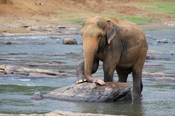 Guía para ir de vacaciones a Sri Lanka