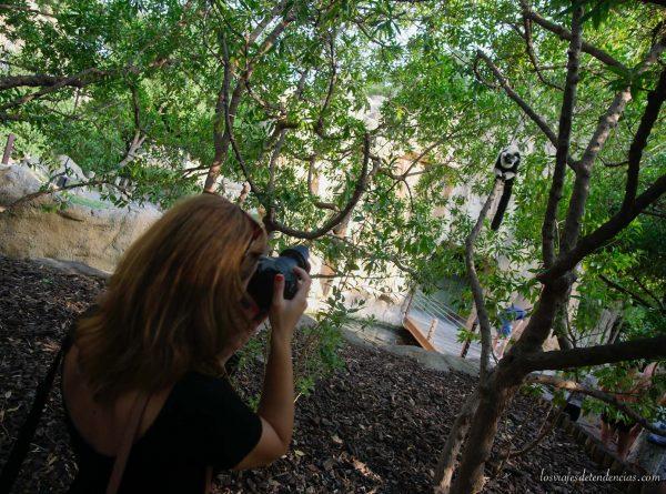 10 razones para visitar Bioparc en Valencia