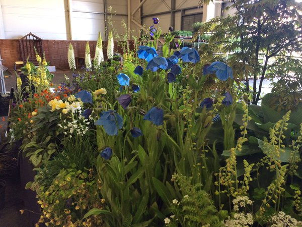 Macplants win Premier Gold award at Gardening Scotland