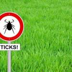 Ticks in Australia