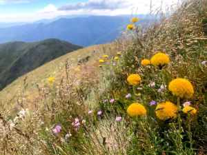 Mt Feathertop via Bon Accord Spur