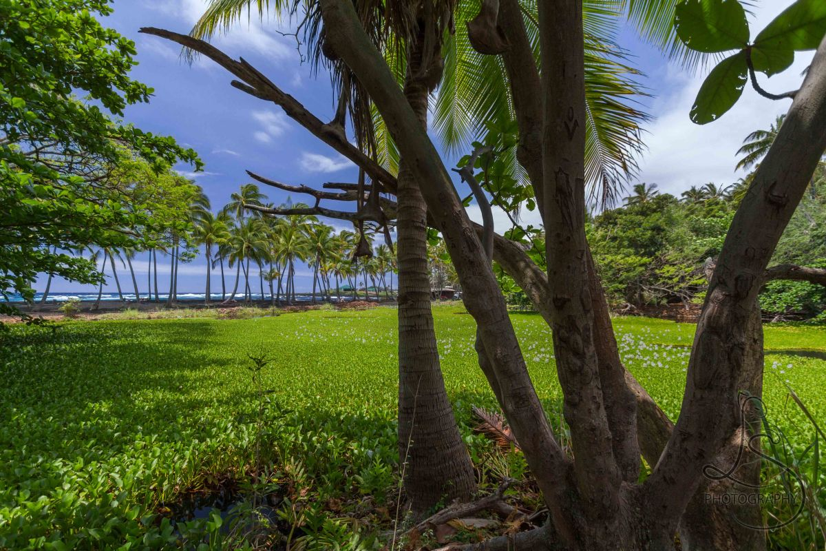 Hawaii: Punaluu Beach Park