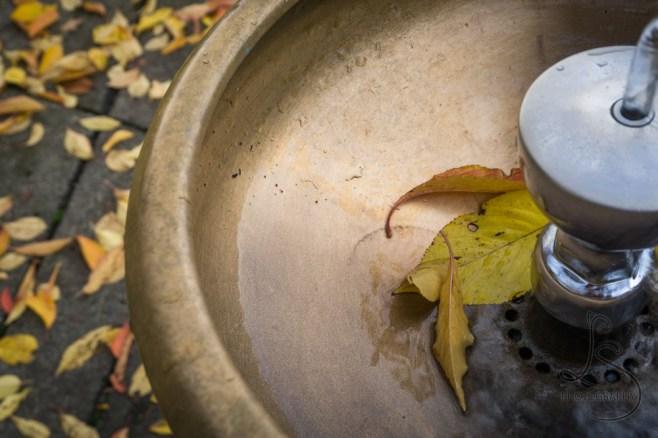 Autumn in the Benson Bubbler