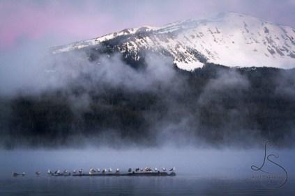 Mist over Diamond Lake near Crater Lake