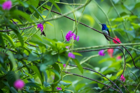 The Bird and Bug of Costa Rica