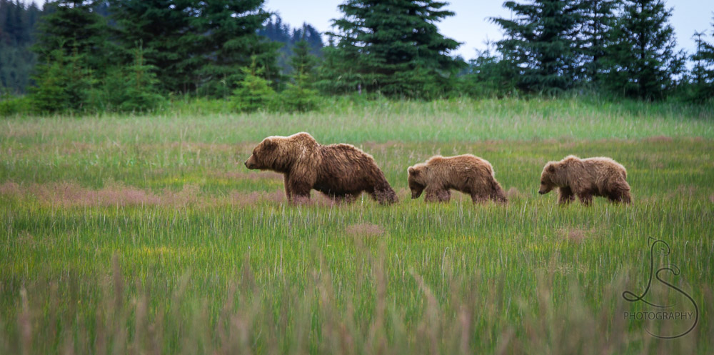 Backpacking Alaska - Day 5: Bears