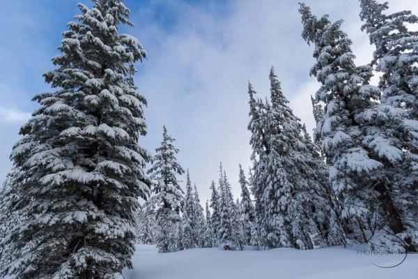 ski-trail-6