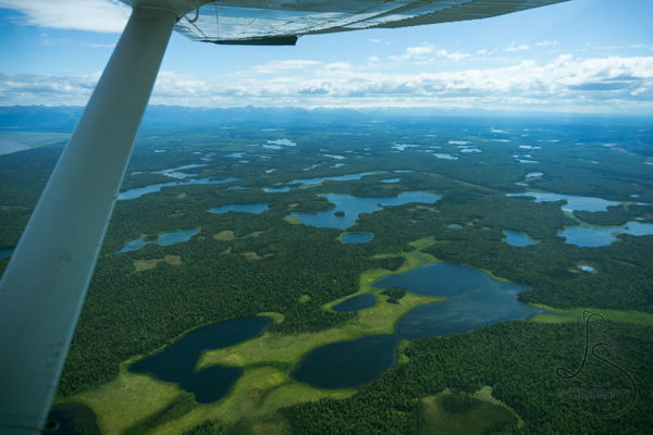 A landscape of thousands of Alaskan lakes, viewed from a bush plane | LotsaSmiles Photography