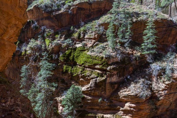 A mossy canyon wall along the Angels Landing trail | LotsaSmiles Photography