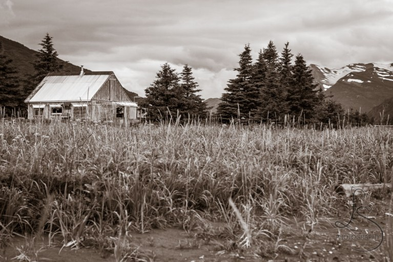 A cabin in the sedge grass of the Alaskan backwoods   LotsaSmiles Photography