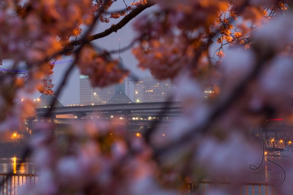 Oregon Convention Center peeking through cherry blossom branches on a dark rainy morning | LotsaSmiles Photography