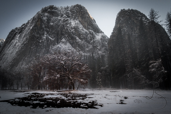 A black tree in a snowy field in front of two peaks in Yosemite National Park | LotsaSmiles Photography