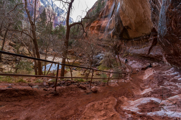 The muddy path that winds behind the trickling waterfalls at the lower of Zion's Emerald Pools