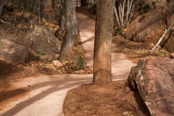 The paved trail winding between trees