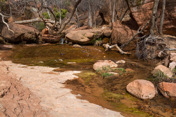 The middle of Zion's Emerald Pools, with a small waterfall feeding it