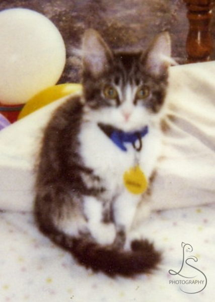 Old blurry photo of Zoe as a tiny kitten | LotsaSmiles Photography