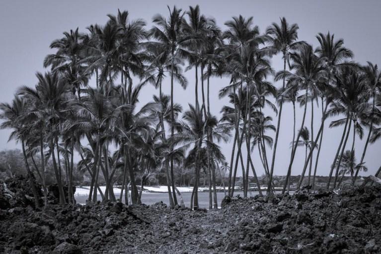 Palm trees lining a Hawaiian beach | LotsaSmiles Photography