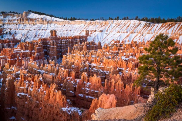 Snowy hoodoos in Bryce Canyon at sunrise | LotsaSmiles Photography