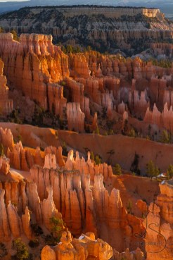 Sunrise makes the hoodoos glow orange in Bryce Canyon National Park