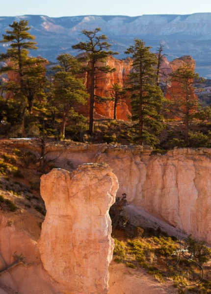 Hoodoos and trees in Bryce Canyon National Park | LotsaSmiles Photography