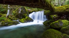 An Oregon waterfall is framed by fallen mossy logs