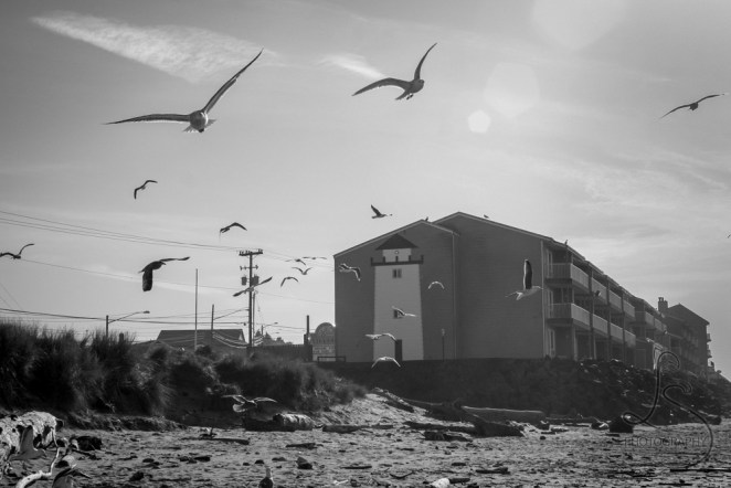 Seagulls taking flight from an Oregon beach with a hotel featuring a lighthouse mural in the background, in monochrome   LotsaSmiles Photography