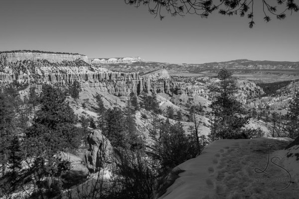 Monochrome scene of a trail stretching out before a valley of hoodoos in Bryce Canyon | LotsaSmiles Photography
