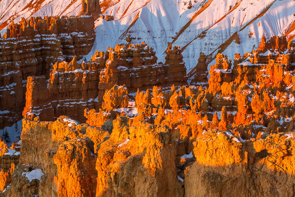 Snowy hoodoos at sunrise in Bryce Canyon | LotsaSmiles Photography