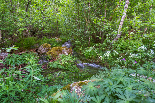 A saturated forest floor, with ground cover literally swimming in creekwater runoff | LotsaSmiles Photography