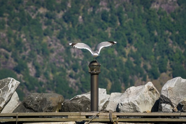 Seagull landing on a lamppost on a jetty at Kyrping, Norway | LotsaSmiles Photography