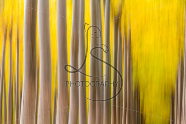 Autumn Blur - LotsaSmiles Photography