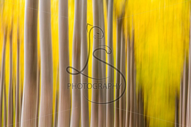 Blurred autumn trees in Boardman, a new stock image available for sale | LotsaSmiles Photography