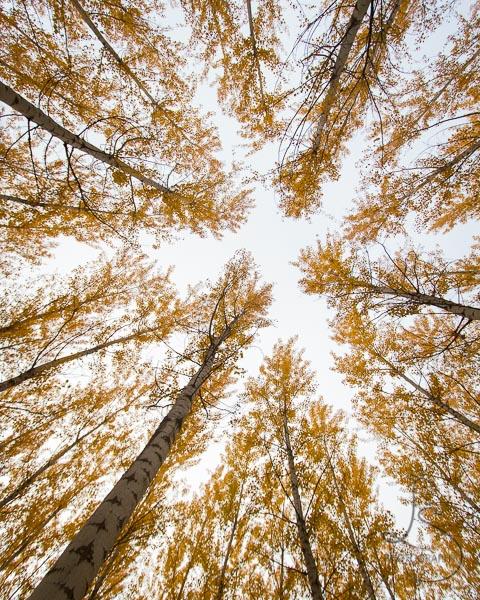 Autumn treetops in Oregon | LotsaSmiles Photography