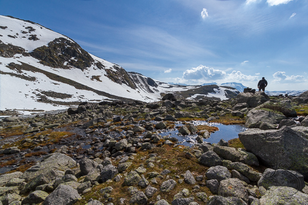 The saturated ground at the top of the trail from Krossbu | LotsaSmiles Photography