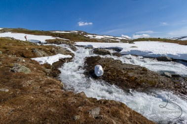 leir-glacier-24