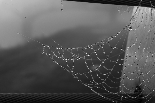 Dewy spider web on a foggy morning in Portland | LotsaSmiles Photography