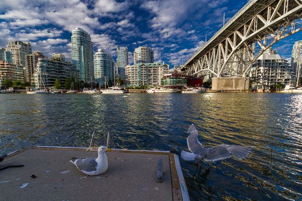 Seagulls on a pier in Vancouver B.C. | LotsaSmiles Photography