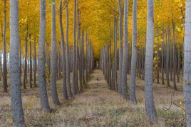 Perfectly aligned trees ablush in autumn lead to what appears to be a door to the great outdoors.