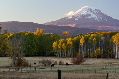 Mount Adams dominates over a local farm at dusk