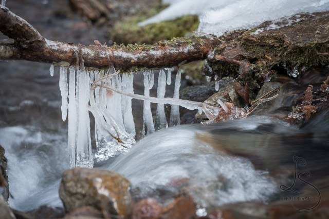 Icicles hanging from a branch downstream from Tamanawas Falls in Oregon | LotsaSmiles Photography