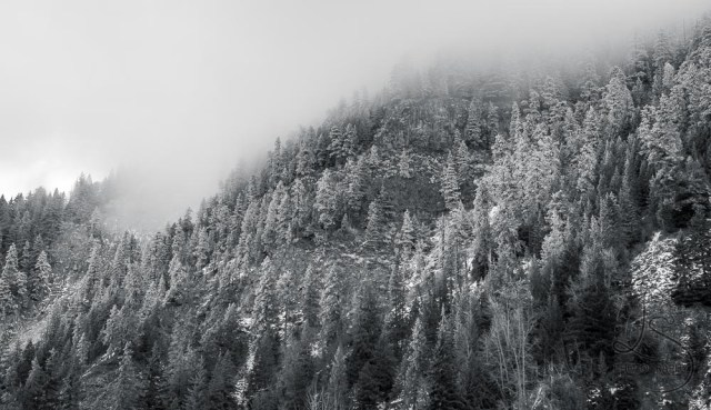 Misty hill of trees in Oregon, in monochrome | LotsaSmiles Photography