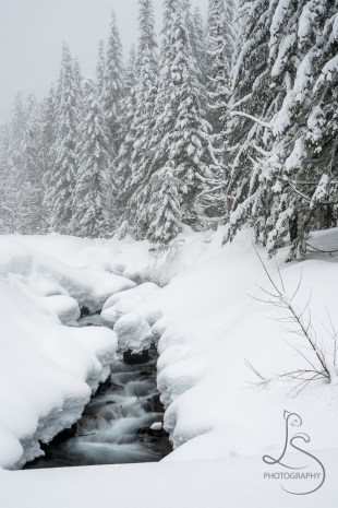 A creek hugged by snow and bordered by trees along the way to the June Lake Trailhead | LotsaSmiles Photography