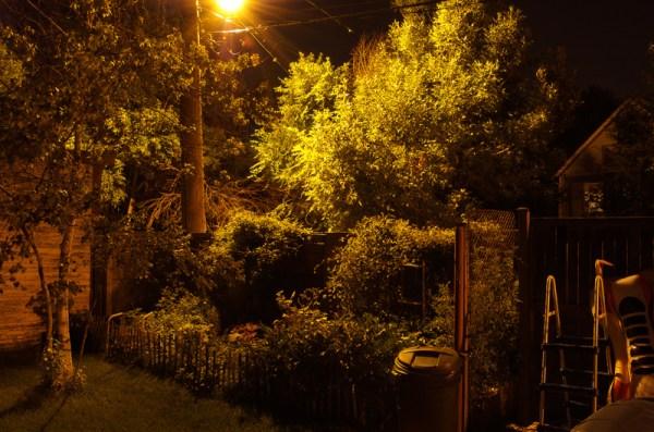 Urban Foliage at Night by Matthew Richards