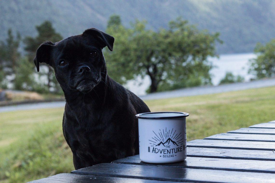 Hund mit Tasse