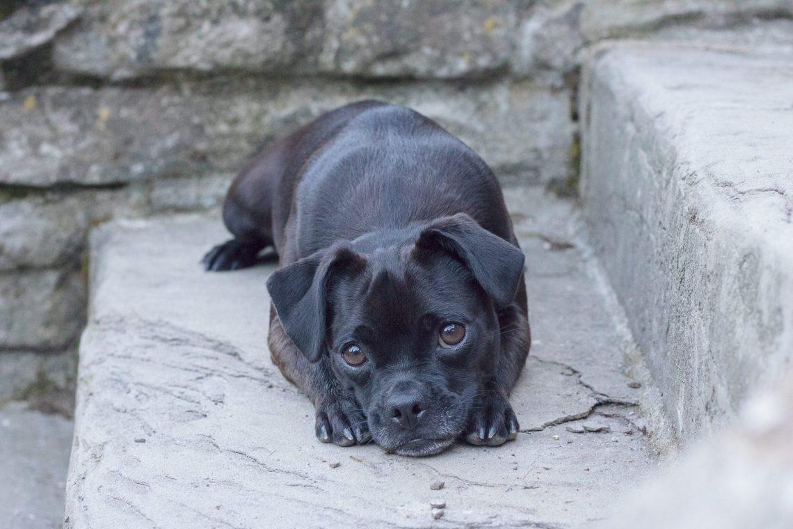 Hund Nala