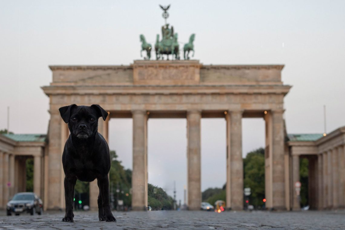 Nala vorm Brandenburger Tor