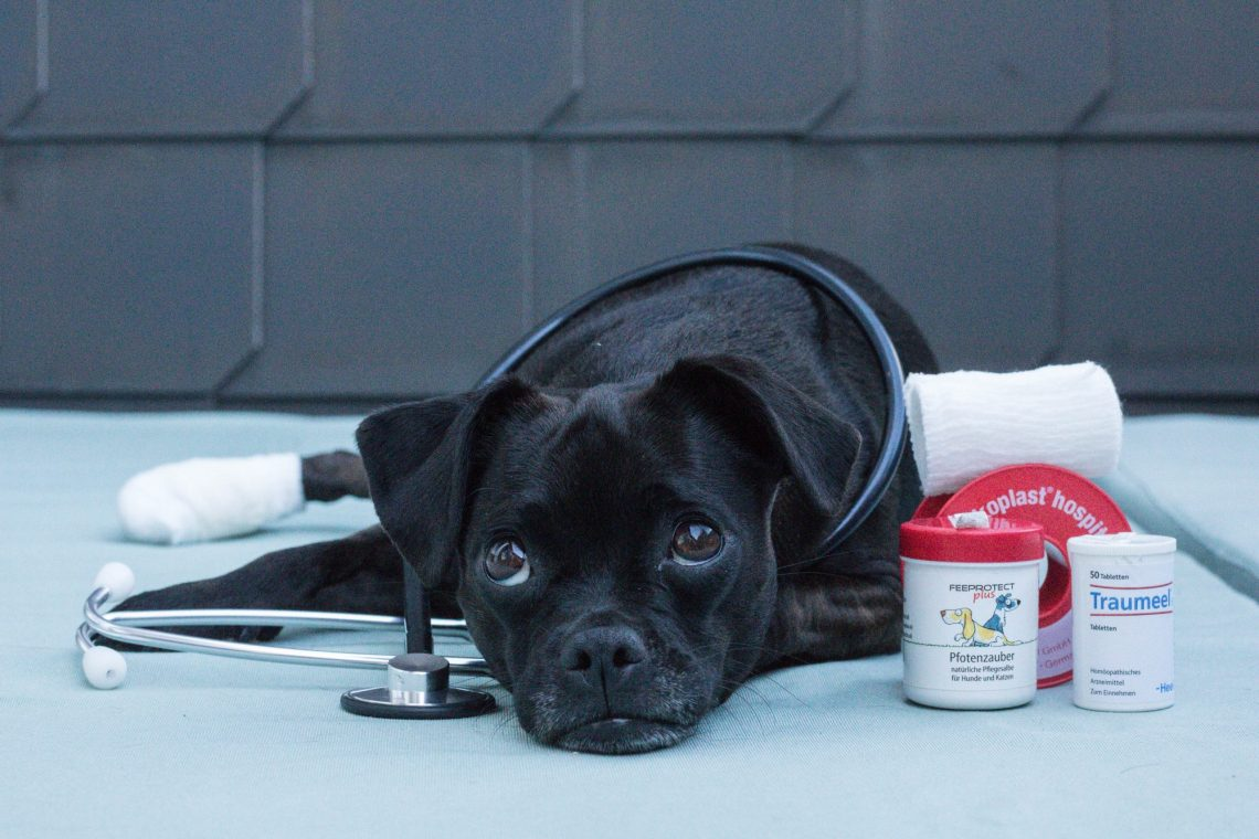 Haustierapotheke Hund