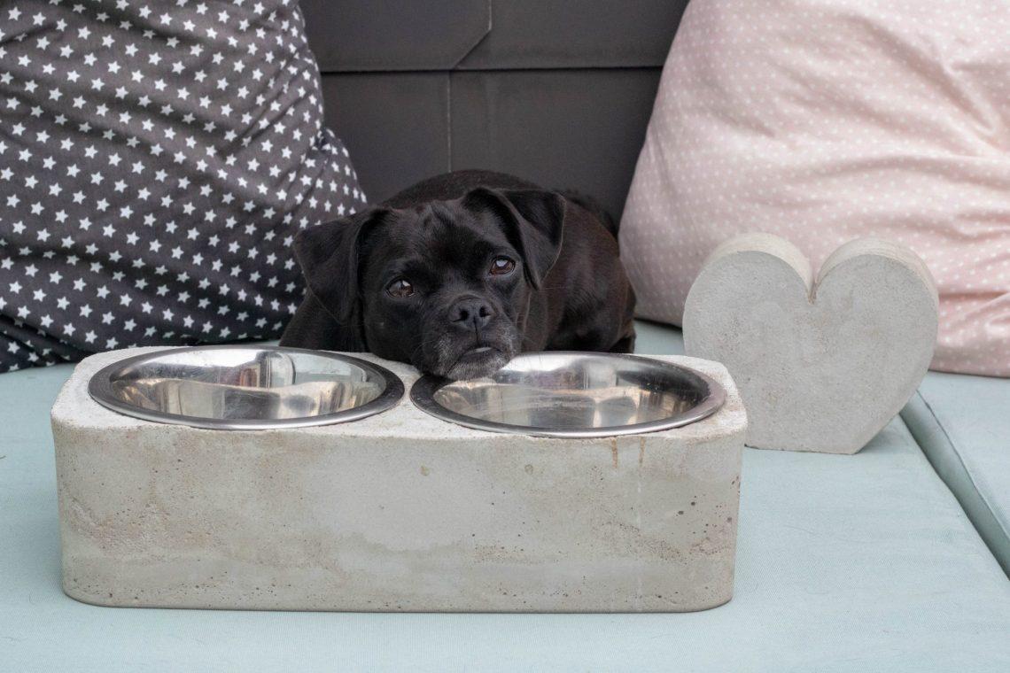 Hundenapf aus Beton DIY