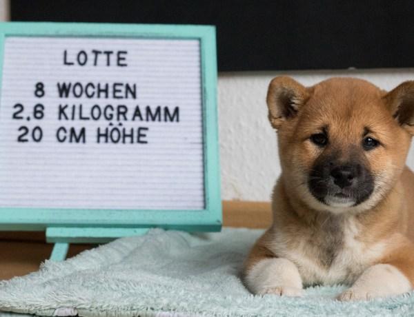 Lotte 8. Woche