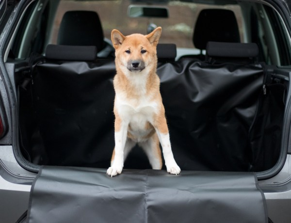 Lotte Autofahren